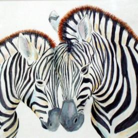 Zebra's  1